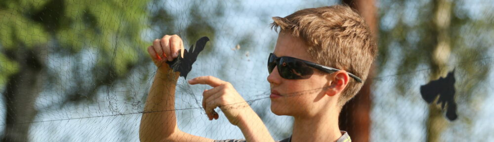 Mezinárodní noc pro netopýry